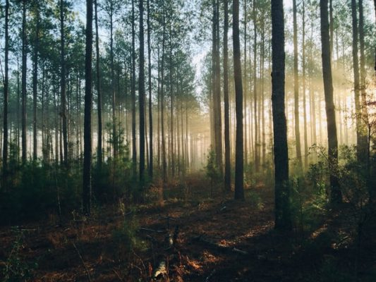 Brain Masters Unsplash wandelen in het bos